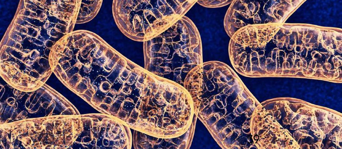 Mitochondrial dysfunction  and disease